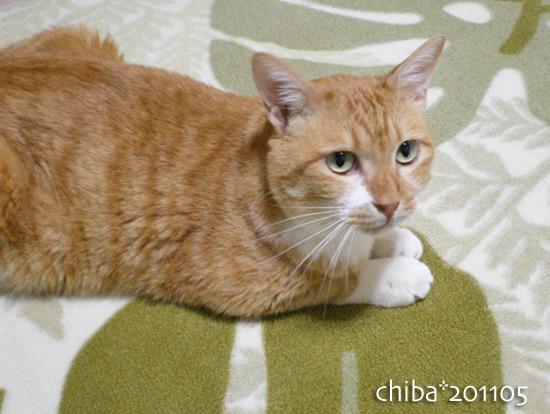 chiba16-05-47.jpg