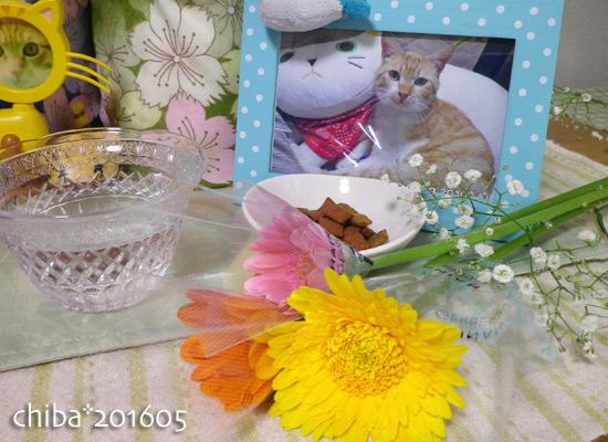 chiba16-06-01.jpg