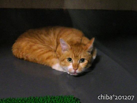 chiba16-07-04.jpg