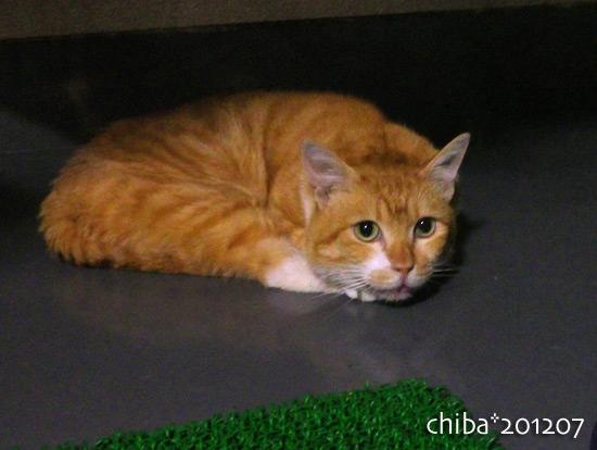 chiba16-07-05.jpg