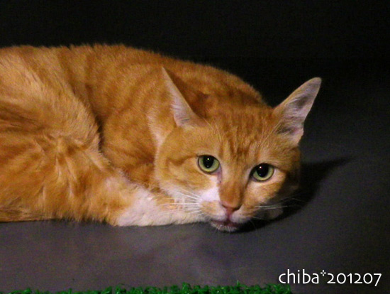 chiba16-07-06.jpg