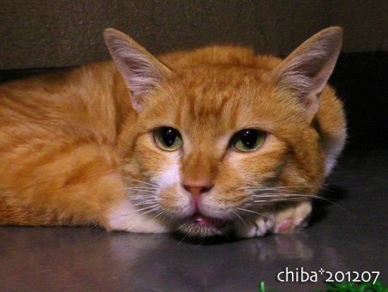 chiba16-07-07.jpg