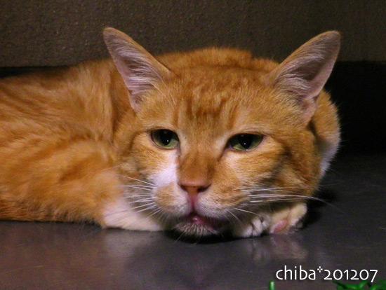 chiba16-07-08.jpg