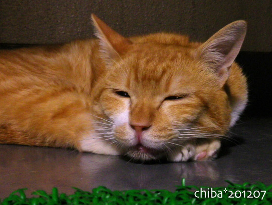 chiba16-07-09.jpg