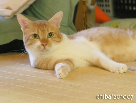chiba16-07-16.jpg