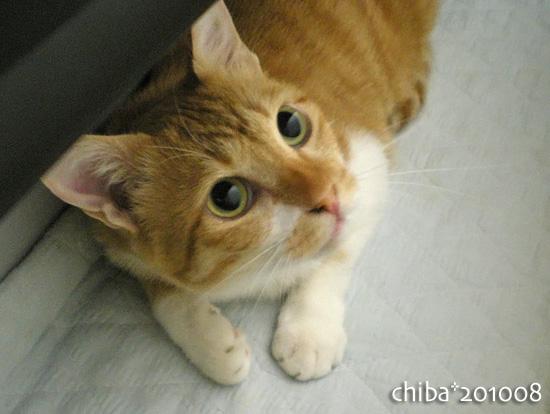 chiba16-08-11.jpg