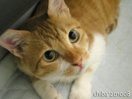 chiba16-08-12.jpg