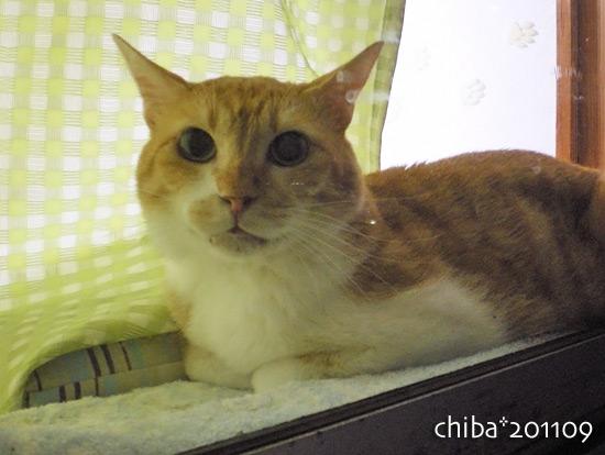 chiba16-09-01.jpg