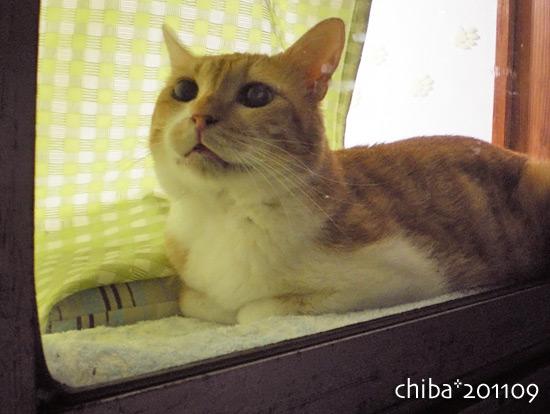 chiba16-09-02.jpg