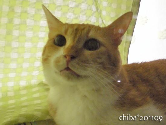 chiba16-09-03.jpg