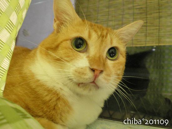 chiba16-09-05.jpg
