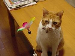 sasuke2002-1-1.jpg