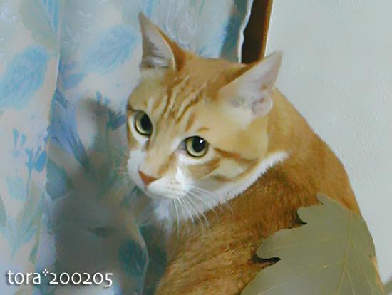 tora16-05-03b.jpg