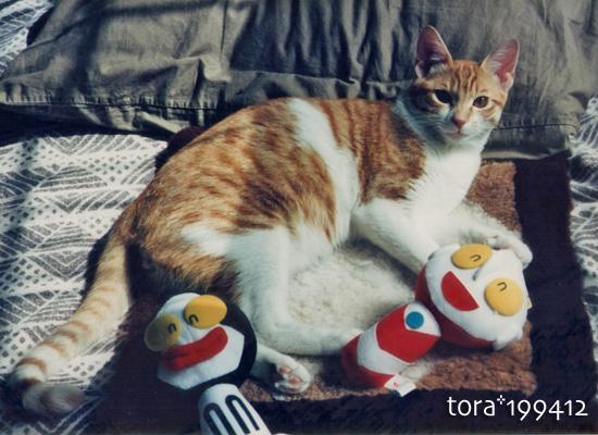 tora16-07-03.jpg