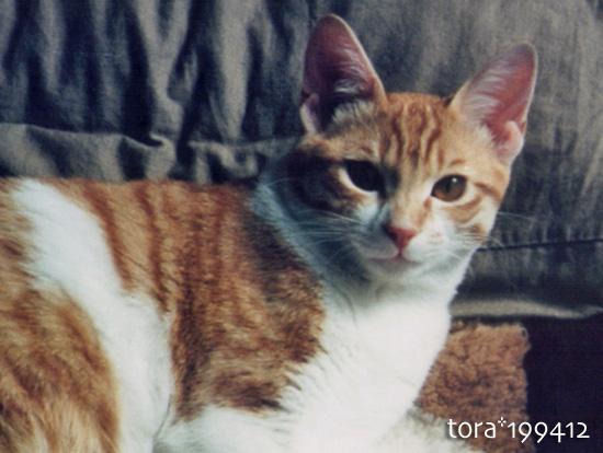tora16-07-04.jpg