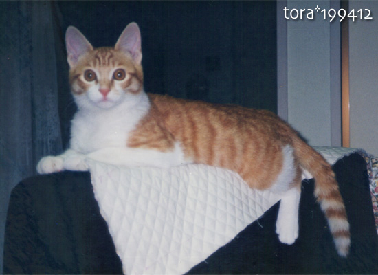 tora16-07-06.jpg