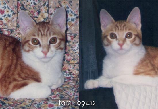 tora16-07-07.jpg
