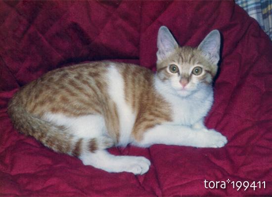 tora16-07-08.jpg