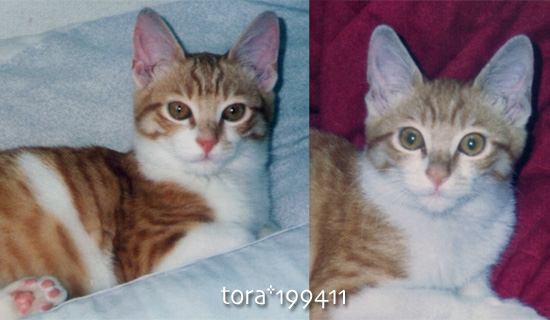 tora16-07-10.jpg