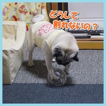 IMG_4115-1_2016101812080023e.jpg