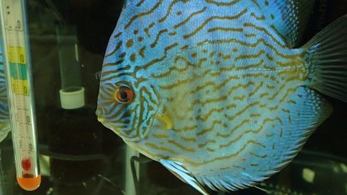 2016-04-10 第34回日本観賞魚フェア (7)