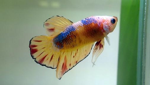 2016-04-10 第34回日本観賞魚フェア (49)