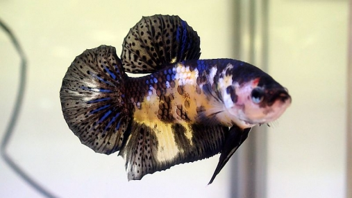 2016-04-10 第34回日本観賞魚フェア (48)