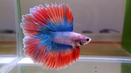2016-04-10 第34回日本観賞魚フェア (44)