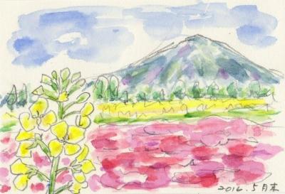 img074芝桜
