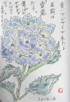 CIMG2136青アジサイ