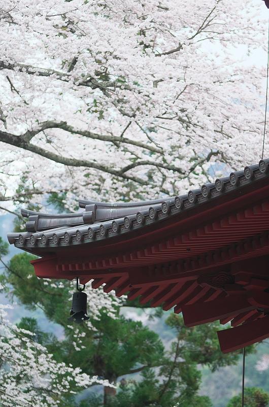 身延山久遠寺の桜 四