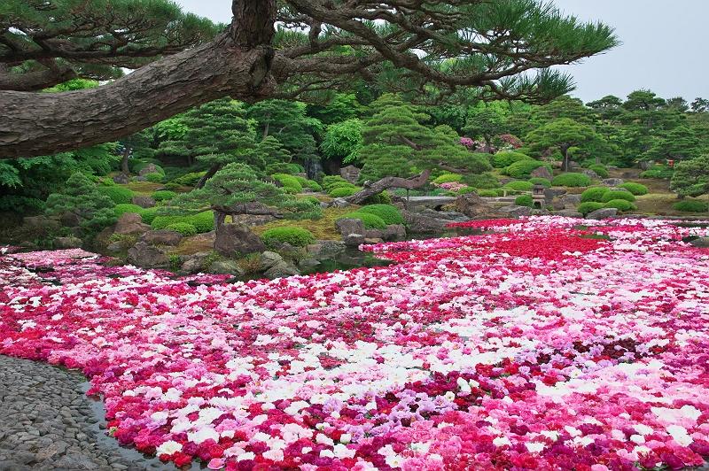 大根島牡丹園