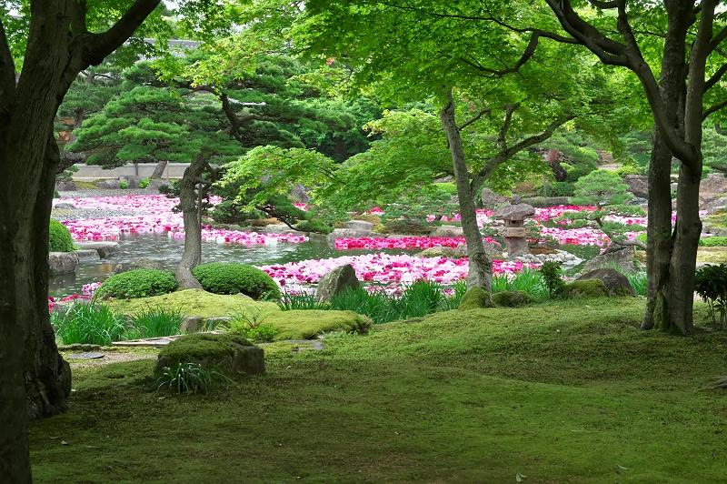 大根島牡丹園 3