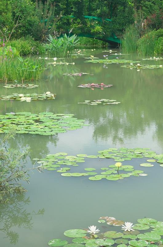 浜名湖ガーデンパーク 3