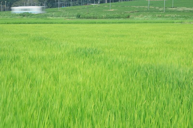 黄緑の沿線風景