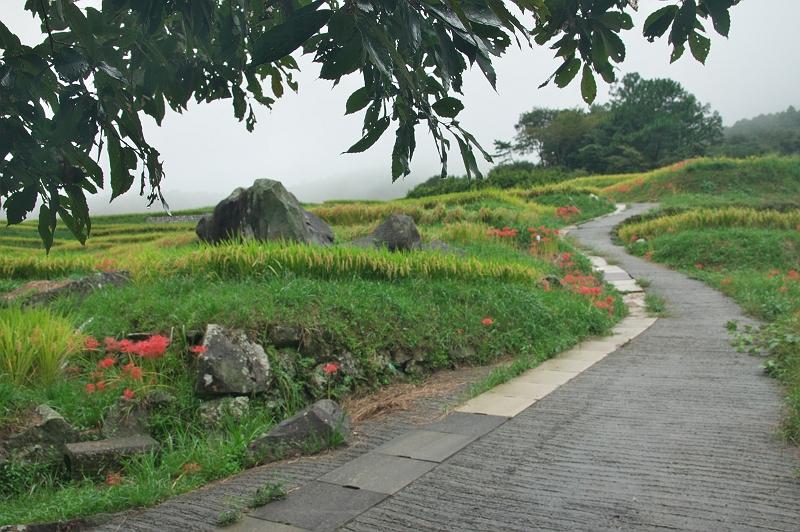 棚田雨景 三