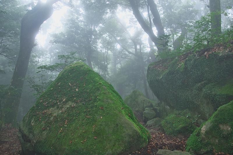 雲上の森 一
