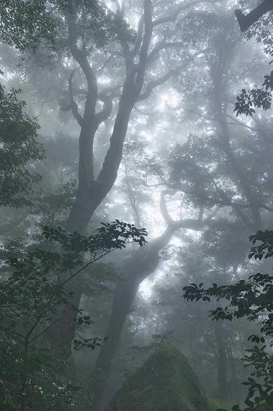 雲上の森 二