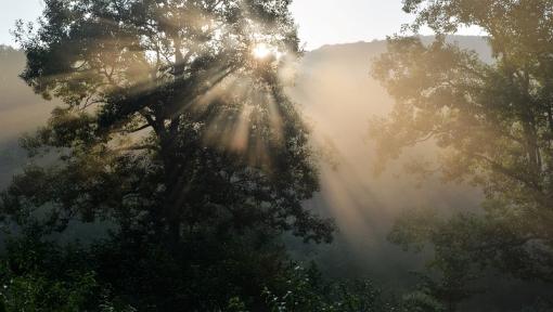 9109霧が谷168215