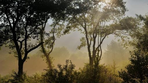 9132霧が谷168216