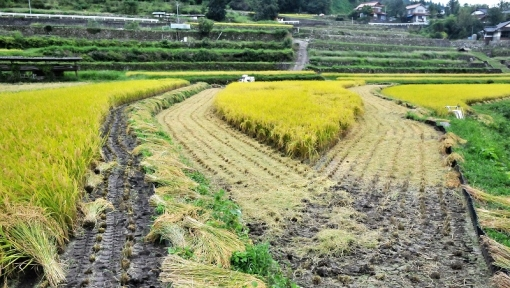 0164稲刈り169101