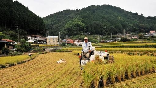0169稲刈り169,102