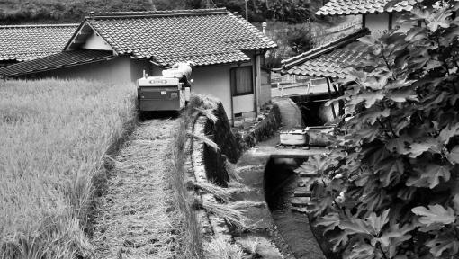 0591稲刈り161081