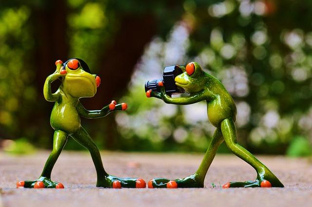 frogs-903167_640.jpg