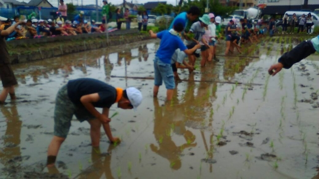 東京稲作 16年、日野の小学生の田植え