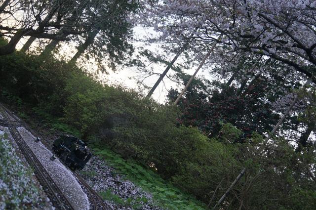 桜とC56 129