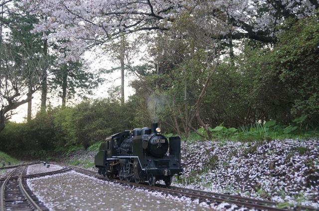小さなC56 129と桜