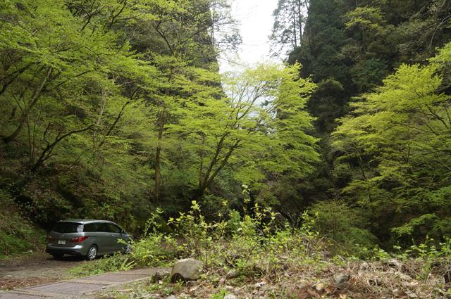 プレマシーと東京奥座敷の新緑