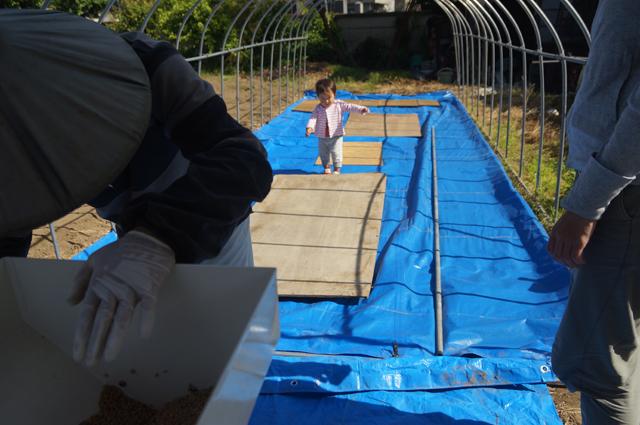 圃場で遊ぶ子供