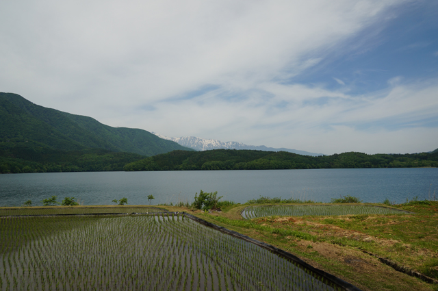 日本アルプスと青木湖と水田